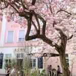 SL_Passau_cafeARAN_magnolia
